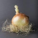 Οργανική φωλιά κρεμμυδιών Στοκ Φωτογραφίες