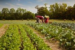 Οργανικοί αγρότες Στοκ φωτογραφία με δικαίωμα ελεύθερης χρήσης