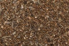 Οργανικοί ξηροί κοινοί Wormwood σπόροι (Artemisia άψηνθος) Στοκ Εικόνες