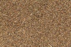 Οργανικοί ξηροί σπόροι σέλινου ή Ajmod (Apium graveolens) Στοκ φωτογραφία με δικαίωμα ελεύθερης χρήσης