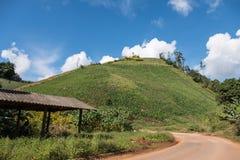 Οργανικός κήπος καλαμποκιού στο λόφο κλίσεων στοκ φωτογραφίες με δικαίωμα ελεύθερης χρήσης