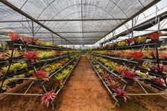 Οργανικός κήπος καλλιέργειας λουλουδιών Στοκ Εικόνες