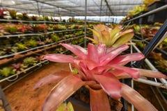 Οργανικός κήπος καλλιέργειας λουλουδιών Στοκ φωτογραφίες με δικαίωμα ελεύθερης χρήσης