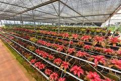 Οργανικός κήπος καλλιέργειας λουλουδιών Στοκ Φωτογραφία