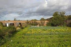 Οργανικός κήπος στοκ φωτογραφία με δικαίωμα ελεύθερης χρήσης