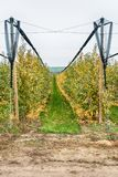 Οργανικός οπωρώνας μήλων στοκ φωτογραφίες