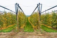 Οργανικός οπωρώνας μήλων στοκ φωτογραφίες με δικαίωμα ελεύθερης χρήσης
