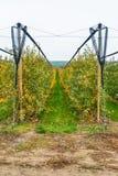 Οργανικός οπωρώνας μήλων στοκ εικόνες