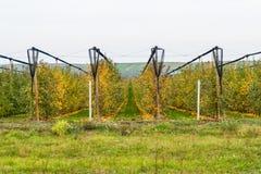 Οργανικός οπωρώνας μήλων στοκ φωτογραφία με δικαίωμα ελεύθερης χρήσης