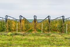 Οργανικός οπωρώνας μήλων στοκ εικόνα