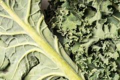 Οργανικός υγιής πράσινος στενός επάνω του Kale, μακροεντολή στοκ φωτογραφίες