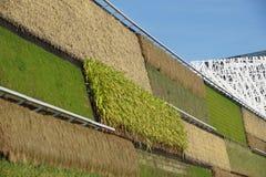 Οργανικός υδροπονικός κάθετος κήπος λαχανικών για το σύγχρονο agricolture Στοκ Εικόνες