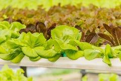Οργανικός υδροπονικός κάθετος κήπος λαχανικών Στοκ Εικόνα
