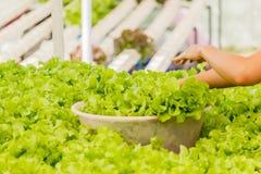 Οργανικός υδροπονικός κάθετος κήπος λαχανικών Στοκ εικόνα με δικαίωμα ελεύθερης χρήσης