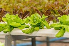 Οργανικός υδροπονικός κάθετος κήπος λαχανικών Στοκ φωτογραφία με δικαίωμα ελεύθερης χρήσης
