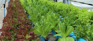 Οργανικός υδροπονικός φυτικός κήπος Στοκ φωτογραφία με δικαίωμα ελεύθερης χρήσης