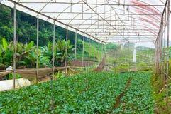 Οργανικός φυτικός αγροτικός κήπος, μελλοντική γεωργία για τα τρόφιμα ασφάλειας Στοκ Εικόνα