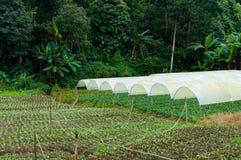 Οργανικός φυτικός αγροτικός κήπος, μελλοντική γεωργία για τα τρόφιμα ασφάλειας Στοκ φωτογραφία με δικαίωμα ελεύθερης χρήσης