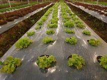 Οργανικός φυτικός κήπος, μελλοντική γεωργία για τα τρόφιμα ασφάλειας Στοκ Φωτογραφία