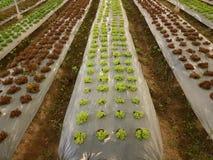 Οργανικός φυτικός κήπος, μελλοντική γεωργία για τα τρόφιμα ασφάλειας Στοκ Εικόνες
