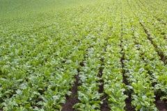 Οργανικός φυτικός κήπος, μελλοντική γεωργία Στοκ φωτογραφίες με δικαίωμα ελεύθερης χρήσης