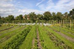 Οργανικός φυτικός κήπος Στοκ Φωτογραφία
