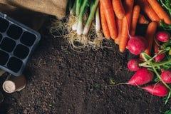 Οργανικός homegrown εξοπλισμός προϊόντων και κηπουρικής με το διάστημα αντιγράφων στοκ φωτογραφία