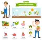 Οργανικός infographic κηπουρικής, απεικόνιση ελεύθερη απεικόνιση δικαιώματος