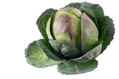 Οργανικό έξοχο φρέσκο ακατέργαστο λάχανο στοκ εικόνες