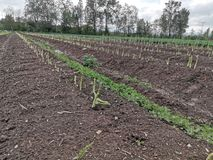Οργανικό αγρόκτημα άνοιξη στοκ εικόνες