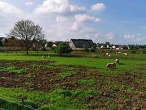 Οργανικό αγρόκτημα άνοιξη στοκ εικόνα με δικαίωμα ελεύθερης χρήσης