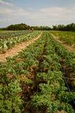 Οργανικό αγρόκτημα στοκ φωτογραφία με δικαίωμα ελεύθερης χρήσης
