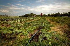Οργανικό αγρόκτημα στοκ εικόνα με δικαίωμα ελεύθερης χρήσης