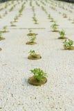 οργανικό λαχανικό Στοκ Φωτογραφίες