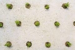 οργανικό λαχανικό Στοκ Φωτογραφία
