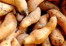 οργανικό γλυκό potatoe Στοκ Εικόνα