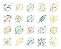 Οργανικό διανυσματικό σύνολο εικονιδίων γραμμών χρώματος φύλλων απλό απεικόνιση αποθεμάτων