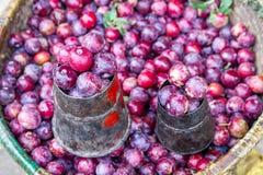Οργανικό εποχιακό μούρο φρούτων Στοκ Φωτογραφίες
