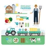 Οργανικό καθαρό σχέδιο Infographic προτύπων καλών υγειών τροφίμων Στοκ Εικόνα