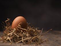 Οργανικό καφετί αυγό Στοκ φωτογραφία με δικαίωμα ελεύθερης χρήσης
