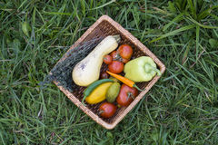 Οργανικό καλάθι λαχανικών Στοκ εικόνες με δικαίωμα ελεύθερης χρήσης