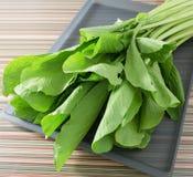 Οργανικό κινεζικό λάχανο ή Bok Choy στο δίσκο Στοκ φωτογραφίες με δικαίωμα ελεύθερης χρήσης