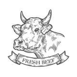 Οργανικό κρέας βόειου κρέατος αγελάδων επικεφαλής, φρέσκο Συρμένο χέρι σκίτσο σε ένα γραφικό ύφος διανυσματική απεικόνιση