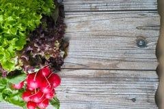Οργανικό κόκκινο ραδίκι και πολύχρωμη φρέσκια σαλάτα μαρουλιού Στοκ εικόνα με δικαίωμα ελεύθερης χρήσης
