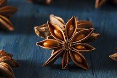 Οργανικό ξηρό αστέρι του γλυκάνισου Στοκ Εικόνα