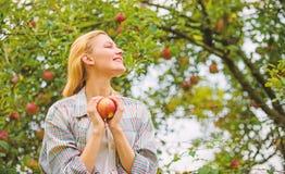 Οργανικό φυσικό προϊόν αγροτικών προϊόντων Το αγροτικό ύφος κοριτσιών συλλέγει την ημέρα φθινοπώρου κήπων συγκομιδών Farmer αρκετ στοκ εικόνα με δικαίωμα ελεύθερης χρήσης
