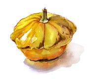 Οργανικό φυτικό σκίτσο watercolor κολοκύνθης κίτρινο Στοκ φωτογραφίες με δικαίωμα ελεύθερης χρήσης