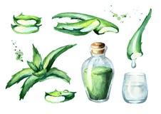 Οργανικό aloe σύνολο αποσπασμάτων της Βέρα Συρμένη χέρι απεικόνιση Watercolor Απεικόνιση αποθεμάτων
