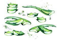 Οργανικό aloe σύνολο της Βέρα Συρμένη χέρι απεικόνιση Watercolor Απεικόνιση αποθεμάτων