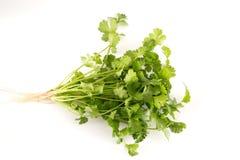 Οργανικό cilantro στοκ φωτογραφία με δικαίωμα ελεύθερης χρήσης